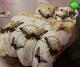 Σετ Σεντόνια - 100% Βαμβακι, M3-115